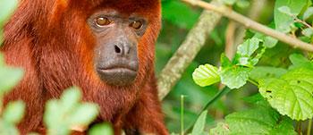 selva-isla-monkey.jpg