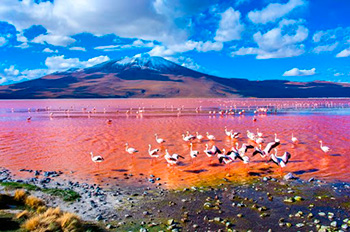 Laguna Colorada Uyuni